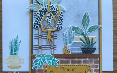 Plantenpost – Een nieuwe stek – Facebook live 10 juni 2021